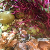 Salmon Sprouted Salad